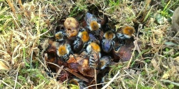 How to Get Rid of Ground Bees – Best Proven Methods (2019)